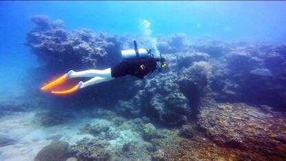 Grad launches website to promote coral reef education