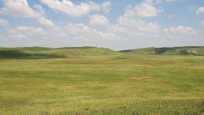 Worldwide study finds that fertilizer destabilizes grasslands
