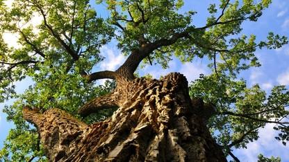UNL to host Arbor Day tree planting April 21
