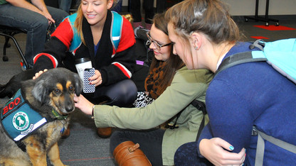 Therapy dogs to visit Love Library
