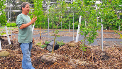 Landscape Services preserves university's historic trees