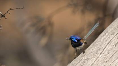 Distinguished company: Birds can recognize members of other species