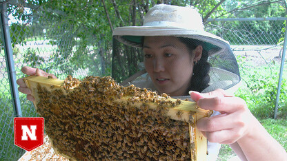 Bee gone? Team surveys presence of viruses in Nebraska bees
