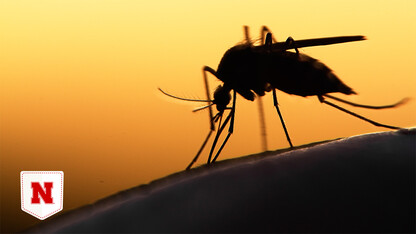 Model could inform predictions of West Nile risk