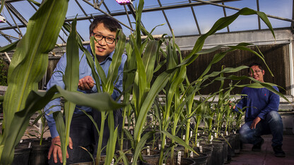 Team IDs differences in gene-related activity between ancient, modern corn