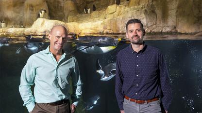 Waiting to exhale: Penguin hemoglobin evolved to meet oxygen demands of diving