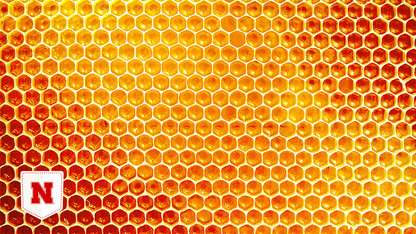 Team IDs inflammation-fighting nanoparticles in honey