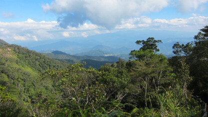 Hardscrabble plants stake large territory amid toxic soils