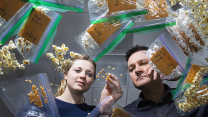 Genes to proteins: Efforts enriching nutrition of popcorn, sorghum