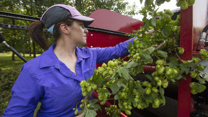 Harvest demo draws hop hopefuls
