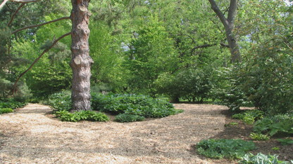 Maxwell Arboretum walking tours continue