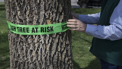 Campus trees tagged as part of statewide campaign