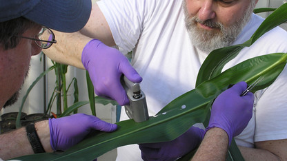 NSF funds CALMIT biodiversity research