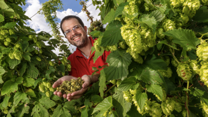 Nebraska research aims to better inform hops producers