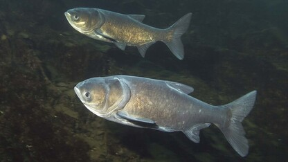 Assessment of post-flood water quality, fish populations funded by Nebraska Environmental Trust