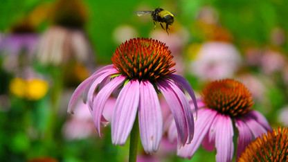 Pollinator tours, activities offered Aug. 3