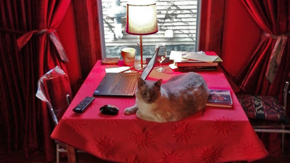 Hinchman's cat pic claims Husker Home Office honor
