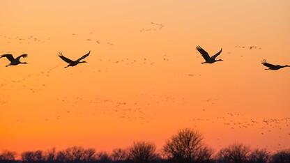 Nebraska Master Naturalist Program receives Nebraska Environmental Trust grant