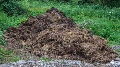 University to study use of manure, mulch to improve soil with environmental trust grant