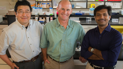Team receives $1.4M grant to research protein evolution