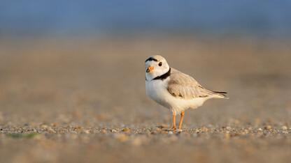 Tern, plover conservation group receives grant from Nebraska Environmental Trust