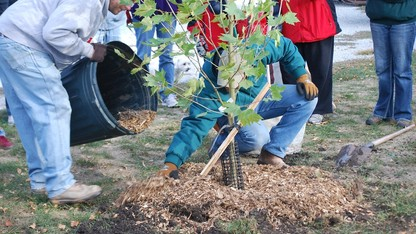 Lectures to examine tree planting options, genetics