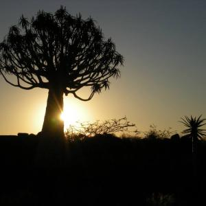 Tree at sunrise