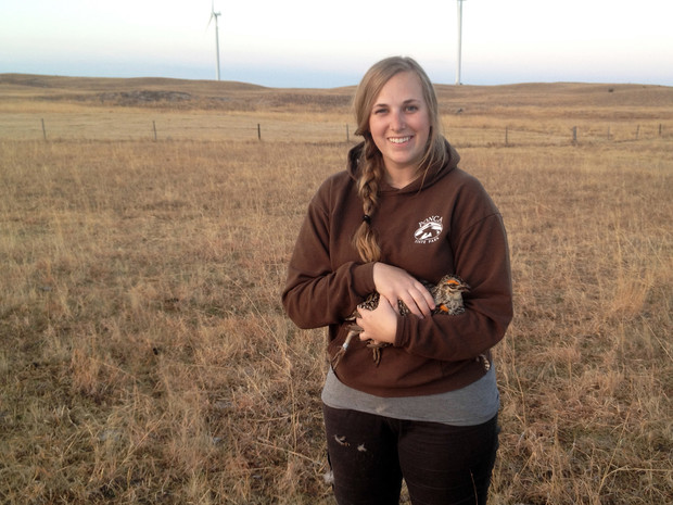 Jocelyn Harrison conducts greater prairie-chicken research in the Sandhills of Nebraska. | Courtesy image