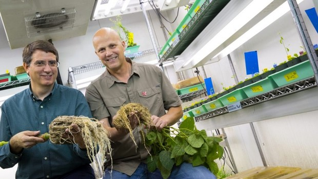 In June, Edgar Cahoon (left) and James Alfano began work on a $20 million project to study root and soil microbe interactions and improve crop productivity.