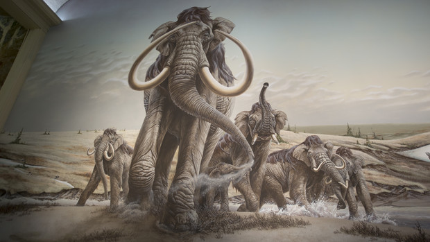 A herd of Columbian mammoths move across the plains in this Morrill Hall mural by Mark Marcuson.