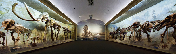 The centerpiece of the NU State Museum is Elephant Hall, which showcases the evolution of elephants.
