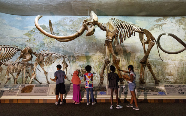 The original Archie the mammoth, on display in the NU State Museum's Elephant Hall, was discovered by chickens pecking away at a hill in 1921.
