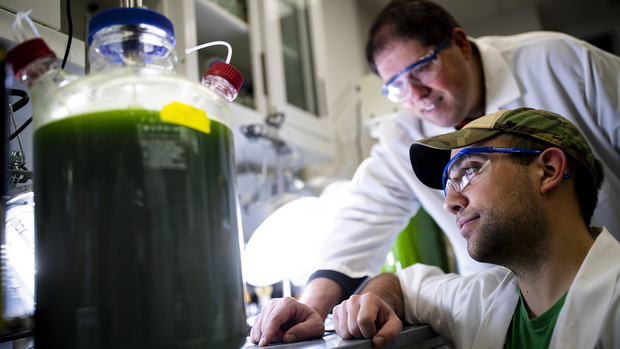 T.J. Nicodemus, a graduate student from Lakeville, Indiana, and lab manager Mark Behrens, eye an experiment using algae and certain wavelengths of light to remove nitrates from groundwater. The research is part of Nebraska's Department of Biochemistry.