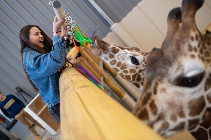 Giraffe toys 1