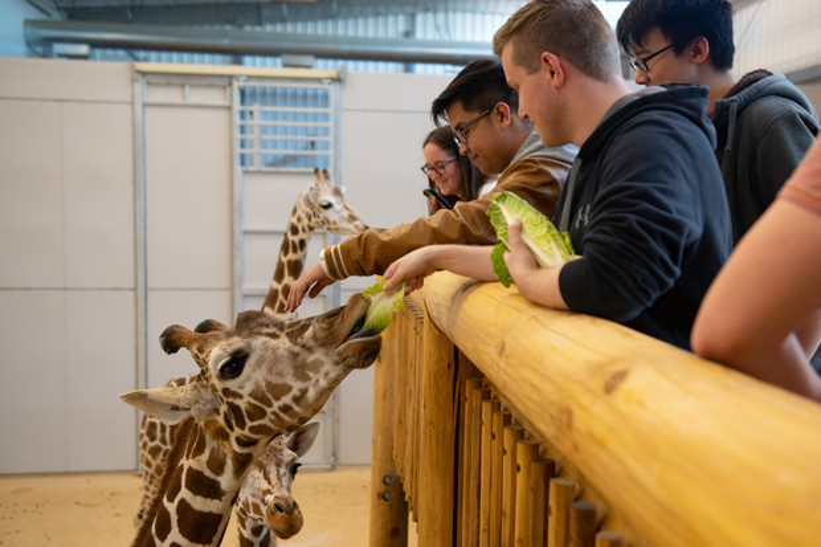 Giraffe toys 3