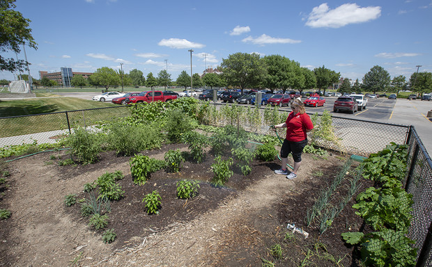 University housing and landscape services employees worked together to plan for the garden while the Willa Cather Dining Center was being planned. This is the first growing season that the garden has been in use.