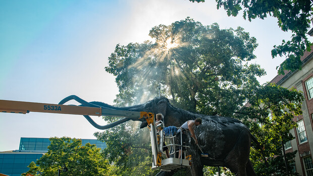 Archie the Mammoth, a life-sized bronze sculpture that welcomes visitors to Morrill Hall, gets his annual bath on Aug. 6.