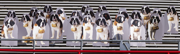 A pack of 25 Saint Bernards stand ready for a stadium rescue as they howl for the Huskers. The dogs were purchased by Applied Underwriters, an Omaha company, as a way to connect their employees who are mostly working at home due to the global pandemic.