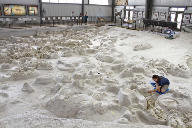 Visitors to Ashfall Fossil Beds State Historical Park can watch as paleontologists uncover new fossils in the 17,500-square-foot Hubbard Rhino Barn.
