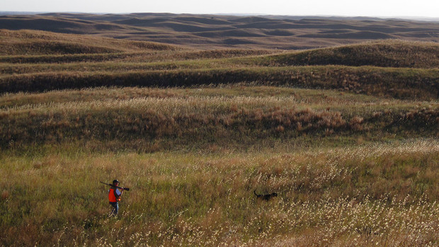 Researchers measured temperatures of grouse nests and nearby available spaces conducive for nesting in the Valentine area of the Nebraska Sandhills. They also documented the vegetation characteristics of the sites.