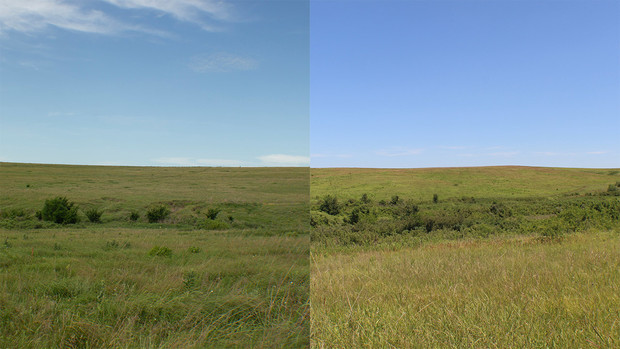 Tallgrass Prairie National Preserve (left), in extreme drought, and Spring Creek Prairie Audubon Center, under near-normal conditions. Survey participants showed no clear preference between the grassland landscapes.