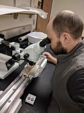 Eric North, assistant professor of practice in the School of Natural Resources, examines a tree core under a microscope. North has developed two new metrics to gauge tree growth.
