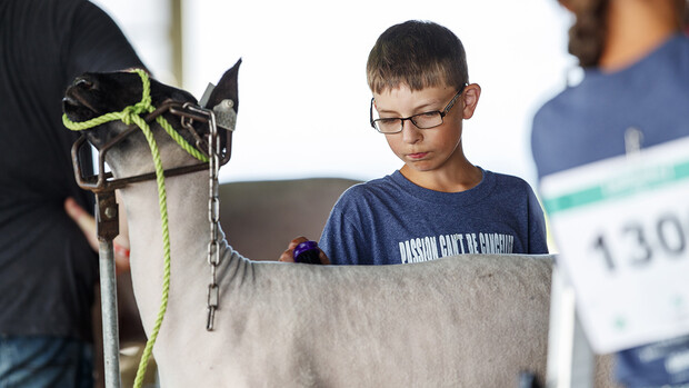 Drew Sanne brushes his sheep's coat July 10 during the Platte County Fair in Columbus.