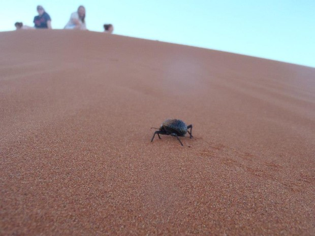 Students watch an insect from atop a Namibia dune.
