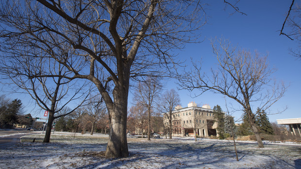 The university will treat about 10 percent of its ash tree population to protect them from Emerald Ash Borer. Trees to be treated include the blue ash (front, center) on East Campus.