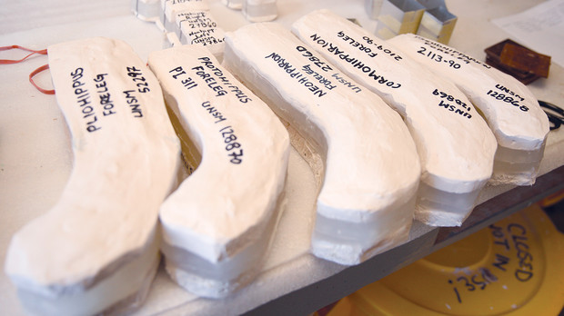 Museum preparators recently created molds of legs from five different horses that are on display at Ashfall Fossil Beds. The original fossils are being loaned to Harvard University for further study.