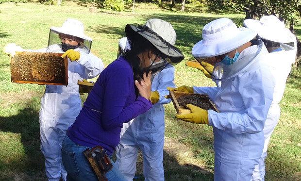 Bees Scouting