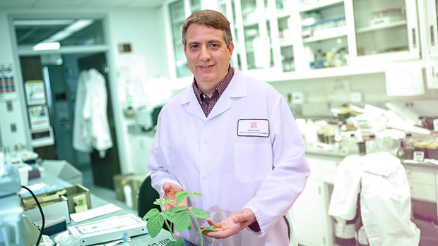 Ed Cahoon, Holmes University Professor of biochemistry and director of the Center for Plant Science Innovation, has been awarded an Outstanding Research and Creative Activity award from the University of Nebraska.