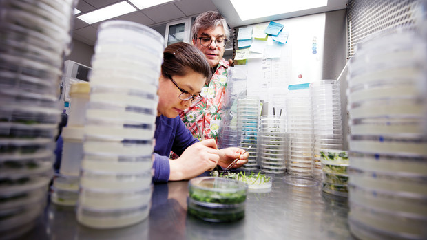 Lili Hou, a postdoctoral research associate, and Tom Clemente, Eugene W. Price Distinguished Professor of Biotechnology, examine sprouts in a Beadle Center lab.