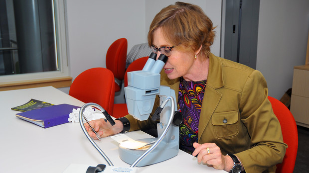 Kim Taylor examines a sticky bug trap. She examines the traps once a month as part of the museum's measures to protect quilts from insect damage.